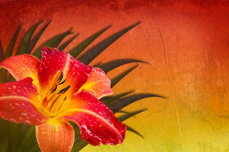 Textured multicolored background red orange yellow with Frans Hals daylily Banco de Imagens