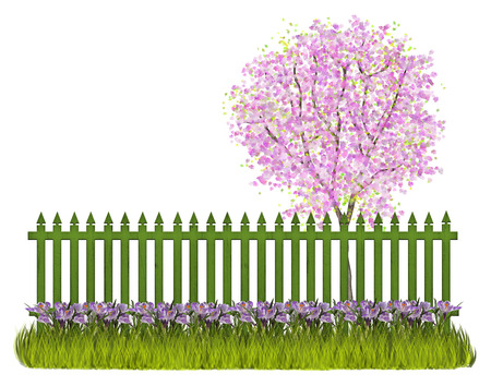 Spring garden with green fence blossoming cherry tree and crocus
