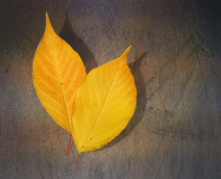 Yellow leaf on a grunge background