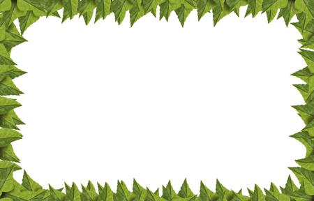 Green summer leaves frame isolated on white
