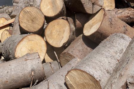 sawn: Sawn tree trunks piled haphazardly
