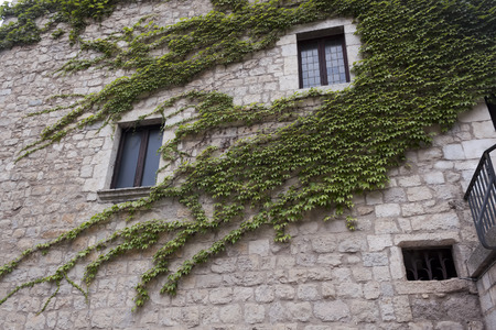twined: In the historic center of Girona. Old house, twined with green leaves