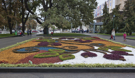 KHARKIV, UKRAINE - OCTOBER 1, 2017: Autumn flowers on a bed in Kharkiv Shevchenko Park adorn the city 新聞圖片