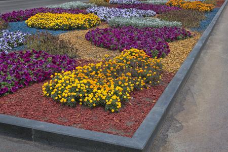 Autumn flowers on a bed in Kharkiv Shevchenko Park adorn the city