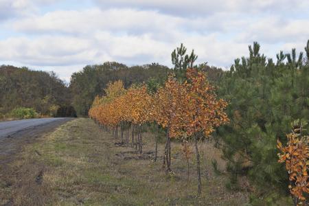 Autumn landscape. Landing decorative trees, foliage painted with autumn colors