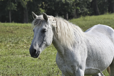 White horse in gray speck of close-up