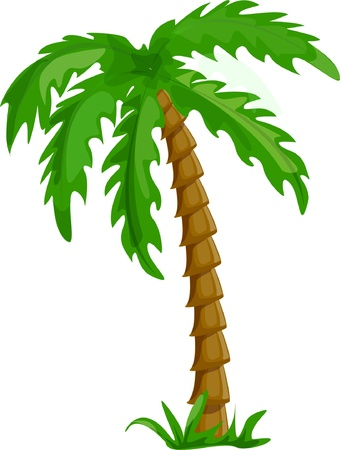 mirage: vector tropical palm trees isolated on white  Illustration