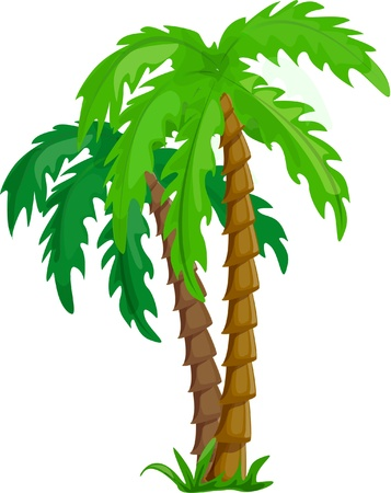 vector tropical palm trees isolated on white  Vector