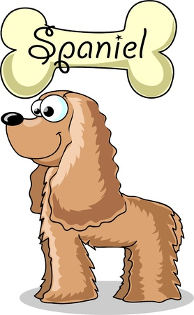stafford: cartoon dog breed Cocker Spaniel Illustration