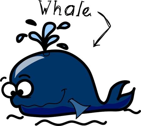 hippo campus: cartoon whale