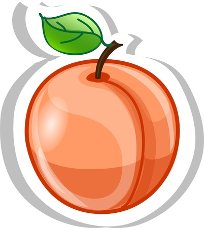 apricot: Cartoon apricot  Illustration