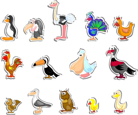 cock duck: Cartoon birds  Illustration