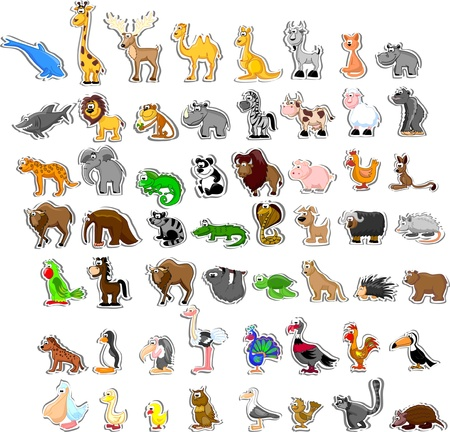 australia jungle: Large set of animals  Illustration