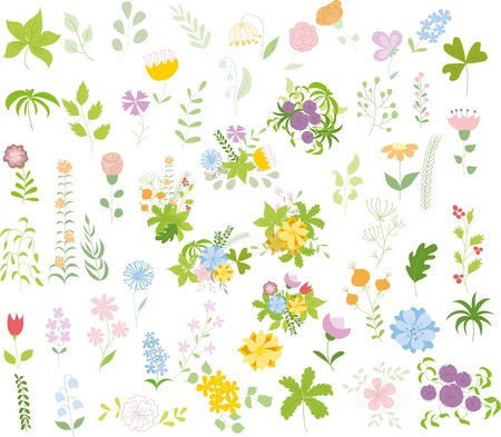Set of floral graphic set, hand drawing vector illustration