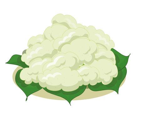 Cauliflower isolated 向量圖像
