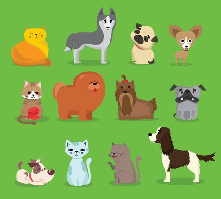 Cute and funny pets on green
