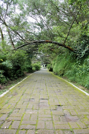 Long path at Telaga Warna in Dieng Plateau Complex, Wonosobo, Central Java, Indonesia  Telaga Warna is an active volcanic lake