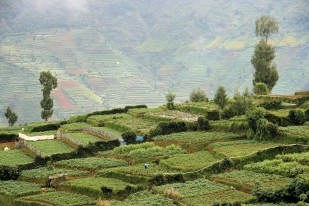 Potato farms on the landscape of Dieng Plateau, Wonosobo, Central Java, Indonesia, with slope of Mount Prahu as a background Stock Photo - 17245166