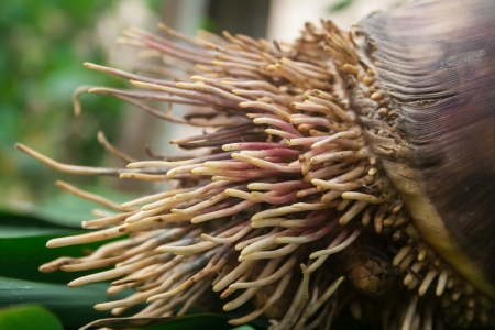 Root of bamboo shoot