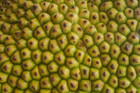 Jackfruit shell Stock Photo