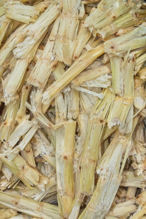 Sugarcane bagasse  photo