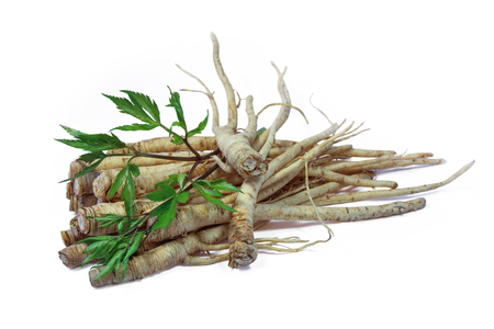 Fresh Ginseng Root and female ginseng (dong quai) leaves on white background Stock Photo