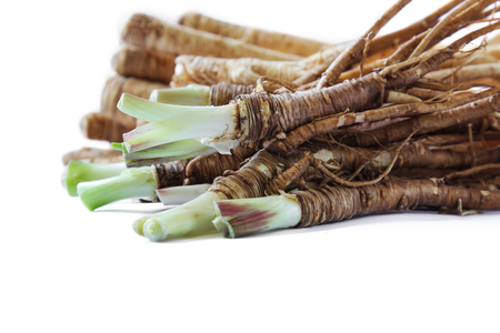 angelica sinensis: Fresh Dong Quai or female ginseng root, Chinese herbal medicine.
