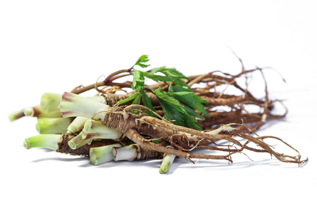Fresh Dong Quai or female ginseng root, Chinese  herbal medicine. Stock Photo