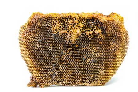 Beehive and the red dwarf honey bees.