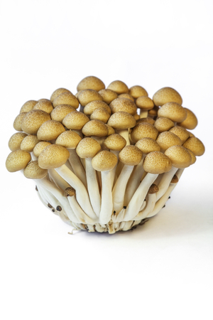 Shimeji Mushroom,edible mushrooms