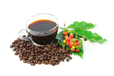 A cup of black coffee with roasted coffee beans, coffee leaves, red and green coffee berries on white background.