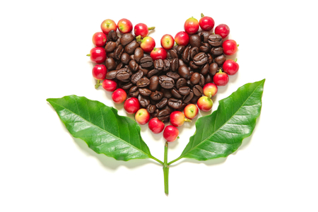 Red coffee beans  berries and roasted coffee in heart shape  with leaves on white background.