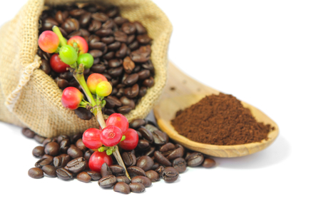 Red coffee beans  berries, roasted coffee in burlap sack and coffee powder in wooden spoon. Selective focus. Stock Photo