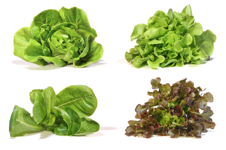 Set with lettuce salad on white background.