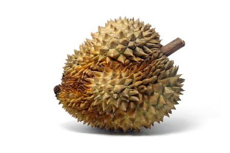 Single full Durian fruit isolated on white background. The durian is distinctive for its large size, strong odour, and formidable thorn-covered rind. Stock Photo