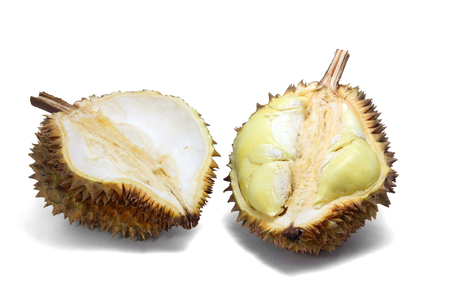 Durian, cut in half to show ripe yellow flesh on white background, strong odour,Asia fruits. Stock Photo