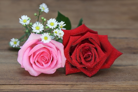 Beautiful big red and pink roses with water drop on wooden background.