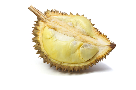 Ripe yellow flesh of Durian isolated on white background, exotic fruit, king of fruits  in southeast Asia. The durian is distinctive for its large size, strong odour, and formidable thorn-covered rind.