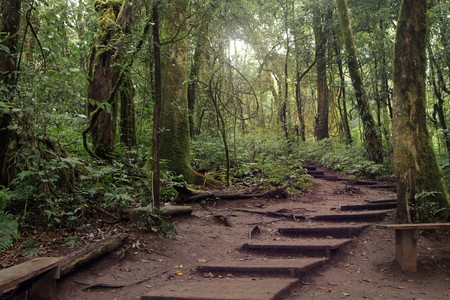 Old concrete stairway covered with soil in a forest, Kew Mae Pan Trail, Doi Inthanon Nature Park, Chiang Mai, Thailand.