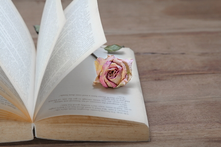 Dried pink rose on the old books open on wooden background. copy space for text.