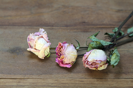 Bouquet of dry Pink roses on old wooden board background. Copy space for text. Stockfoto