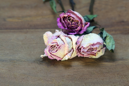 Close up of three dry Pink roses on old wooden board background. Stockfoto