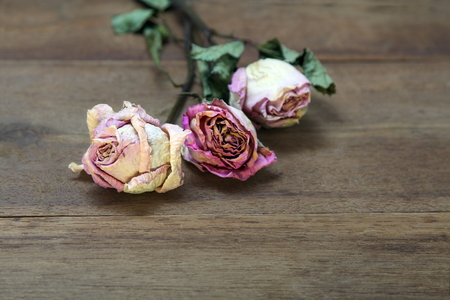 Bouquet of dry Pink roses on old wooden board background.