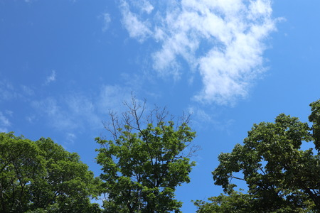 Blue sky, clouds. Treetops.
