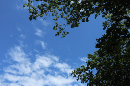Blue sky, clouds, treetops, Green leaves, branches.