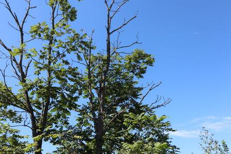 Blue sky, clouds. Tree tops.