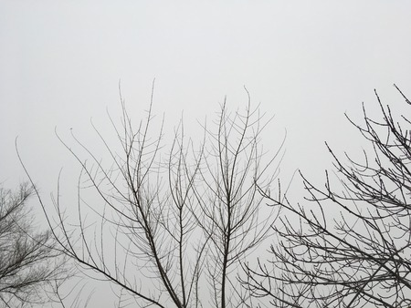 Tree branches on sky background. Winter season.