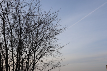 Bare tree branches against evening sky. Winter nature.