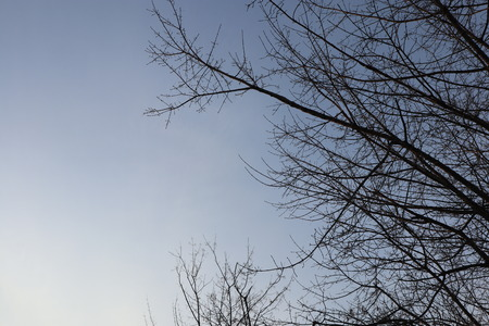 Tree branches against blue evening sky. Winter nature. Stock Photo