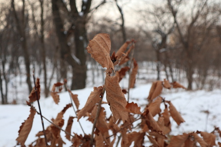 Dry leaves on a branch. Winter park. Imagens